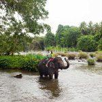 Honeymoon | Sri Lanka Travel Guide | LankaTourExperience
