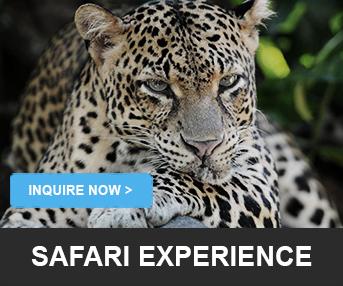 Safari Experience LankaTourExperience