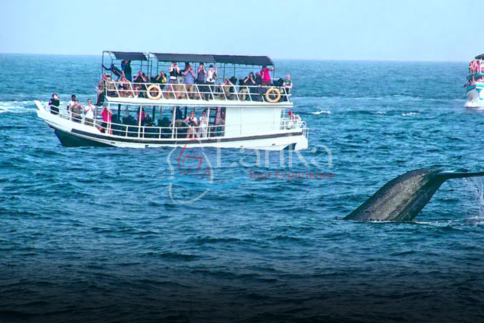 Sri Lanka, Whale watching Mirissa, Sri Lanka