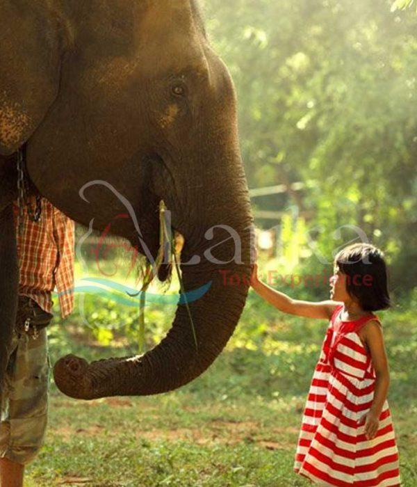 Family Safari Tour Of Sri Lanka – 10 Days | Sri Lanka Travel Guide | LankaTourExperience
