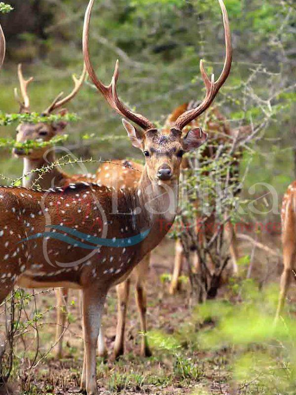Yala National Park Short tours | Sri Lanka Travel Guide | LankaTourExperience