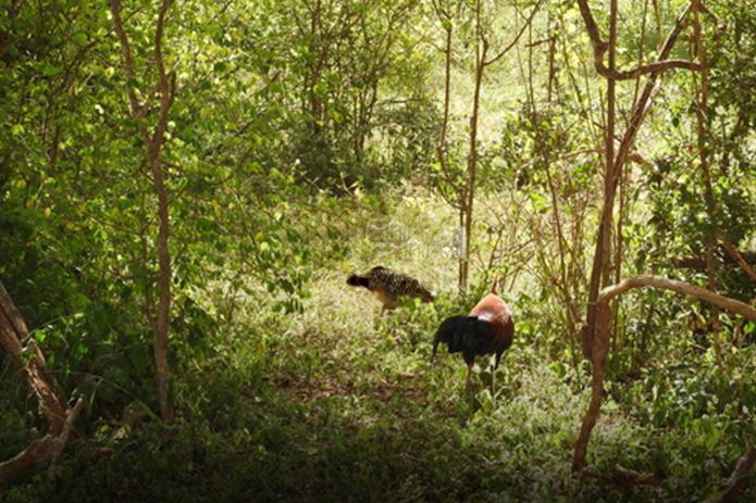 Sinharaja rain forest nature reserve, Sri Lanka