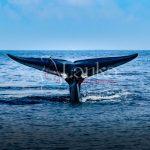 Sri Lanka, A tale of a whale, Mirissa