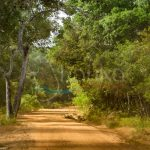 Dirt Road at Willpaththu National Park, Sri Lanka | Sri Lanka Travel Guide | LankaTourExperience