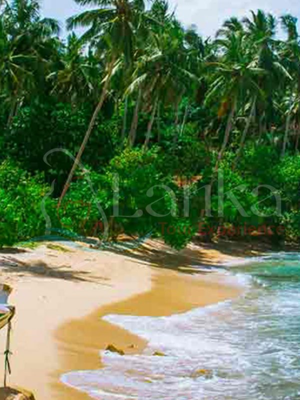 Tropical beach in Sri Lanka, Mirissa | Sri Lanka Travel Guide | LankaTourExperience