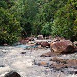 Kitulgala Forest Reserve