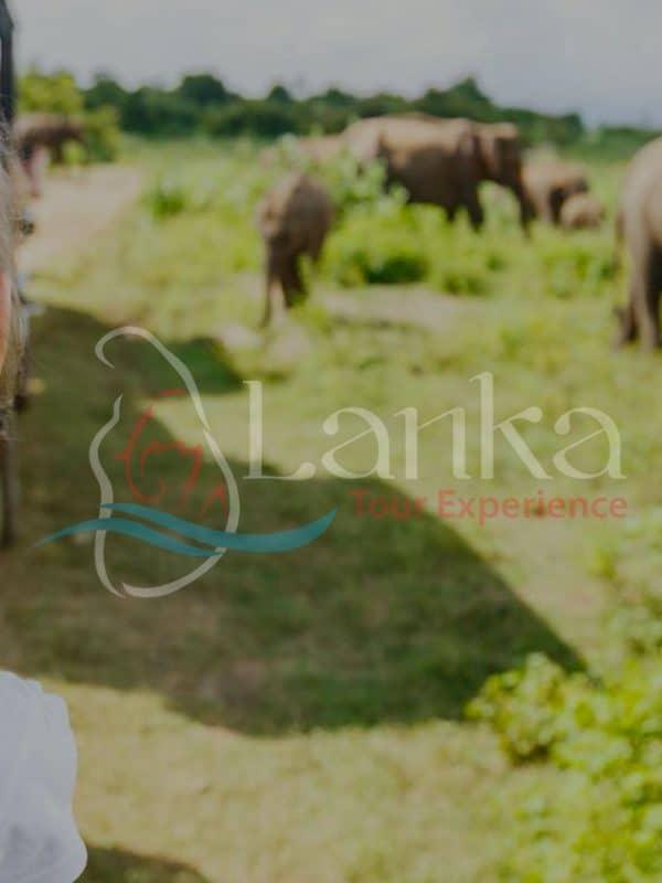 Family Safari 15D 14N | Sri Lanka Travel Guide | LankaTourExperience