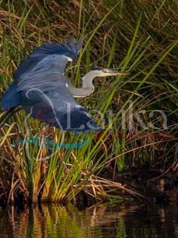 Sri Lanka, Bird Watching Holidays